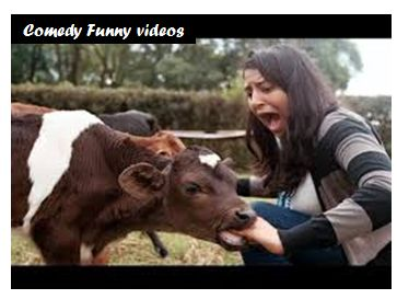 Today, In this article I am going to share the most funniest videos. You will never stop your laugh after watching this funny videos. You have never seen funny videos like this ever before. Comedy videos-Most funniest Videos https://youtu.be/wDKv_Ts17QQ  https://youtu.   #comedy videos #crazy funny videos #crazy girl videos #download funny videos #funny prank videos #funny videos #girls videos #very funny #whats app funny videos