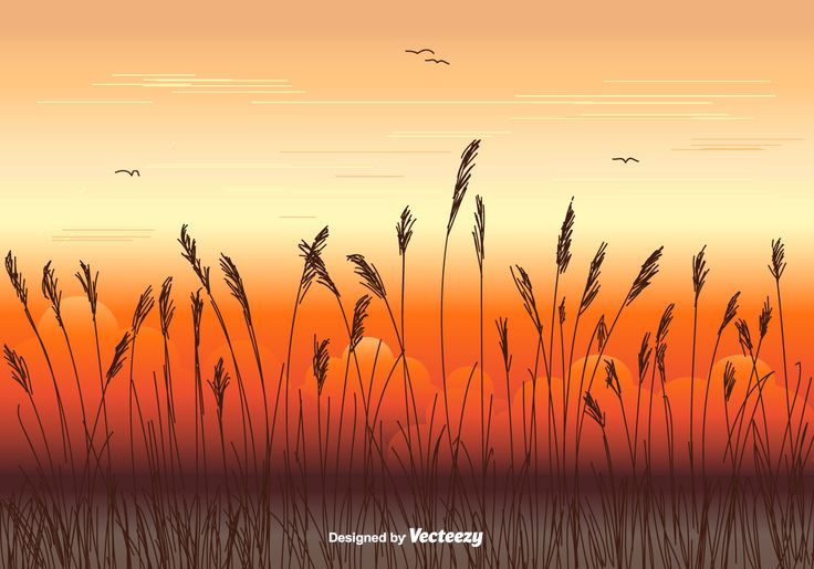 Vector illustration of sea oats silhouette on background sunrise.