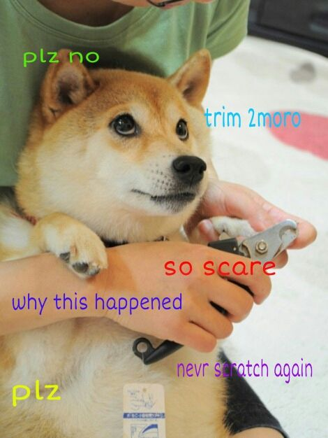 Shibe Doge - I'm becoming obsessed with these memes doesn't want nails to be trimmned