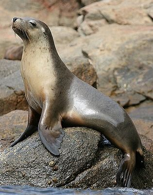 The easiest way to tell the difference between a sea lion and a seal: sea lions have ears you can see, like a lion. ;-)