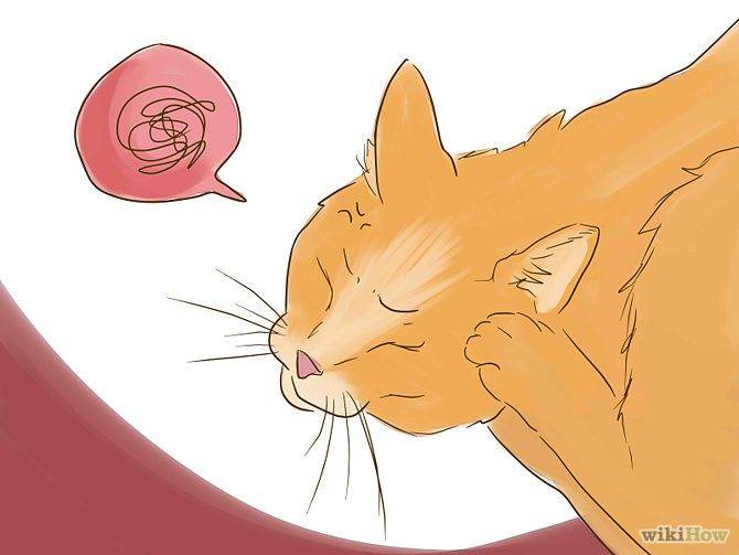 Ear mites are annoying, microscopic creatures that live in cats' ears, causing a good deal of irritation. Infected cats may scratch their ears excessively or shake their heads frequently. If you notice your cat showing these symptoms, follow the steps in this article to get rid of the ear mites.