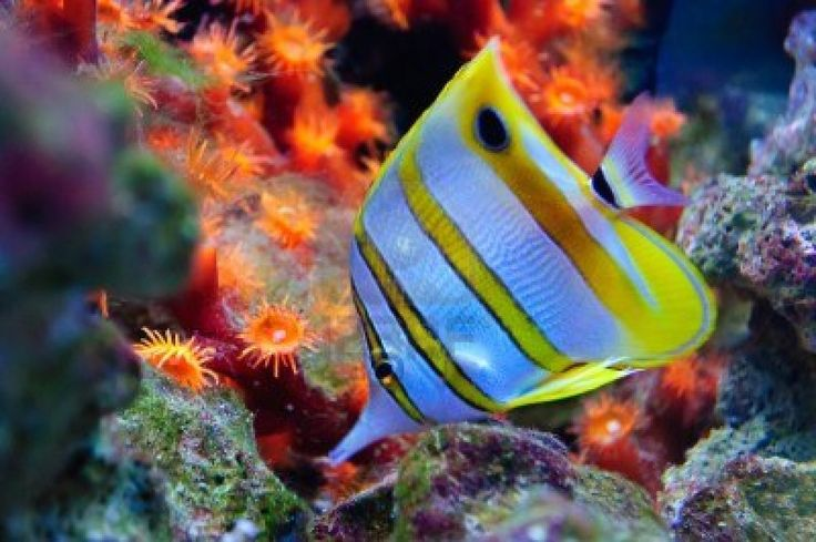 Pin by vickie schumaker thomason on fish of all colors and for Exotic saltwater fish