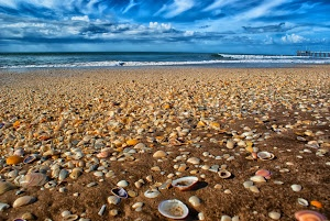 Covered in sea shells - On the beach in Pinamar,Argentina Click on the image to enlarge.
