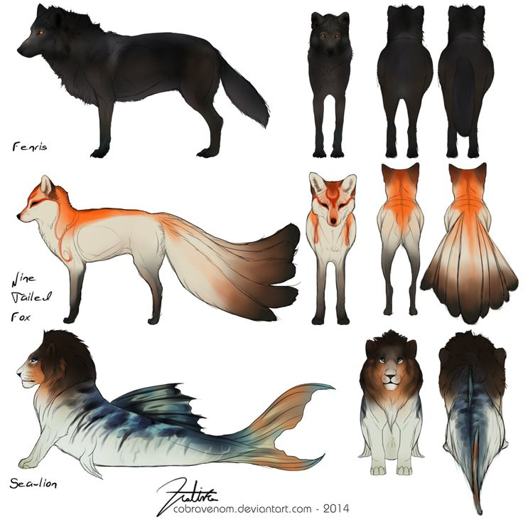 Sims  Cats And Dogs Anatomy