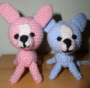 Chihuahua bleu et rose