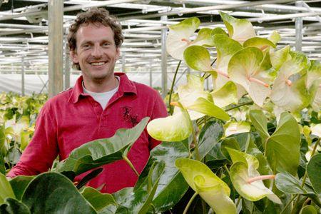 """Anthuriumkwekerij Van Wijk (Sappemeer) """"De Anthuriums worden dagelijks in de eigen kwekerij gesneden waardoor u van de lange houdbaarheid (tot wel één à twee maanden), die zo kenmerkend is voor deze bloemen, optimaal kunt genieten."""""""