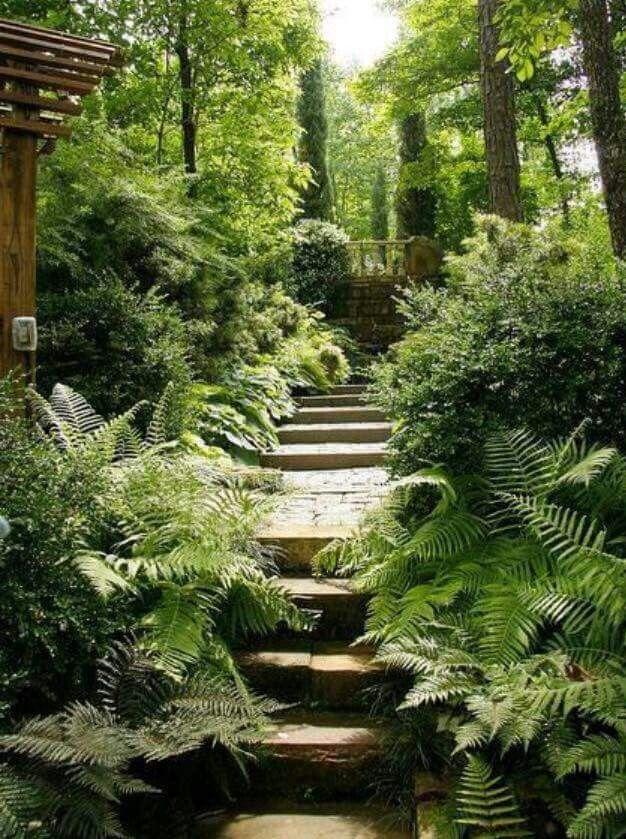 1000 Ideas About Jungle Gardens On Pinterest Louisiana