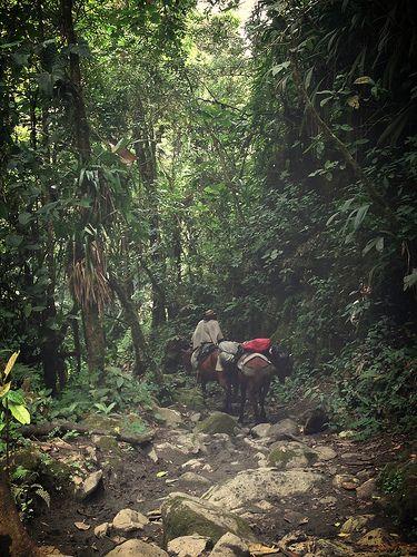 Farmer - Salento - Colombia