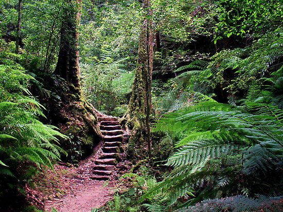This image was captured on the Grand Canyon bushwalk in the heritage listed Blue Mountains National Park near Blackheath, NSW, Australia.