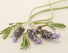 Fresh Home by Partylite - Raikas Laventeli & santelipuu Rauhoittavan metsäinen tuoksu yhdistää luonnollisen laventelin ja santelipuun aromit ja raikastaa kotia. Täydellinen valinta lepohetkiin ja rentoutumiseen.
