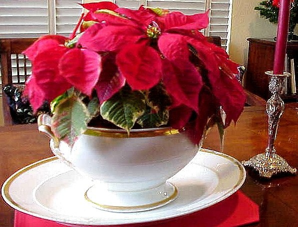 Five minutes is all it will take to put together this centerpiece. Start with a low-growing poinsettia plant, place it a decorative container, add candles on each side and you're done. Here we've used a pretty soup tureen as the plant's container, accented with ornate silver candlesticks and bright red candles. (I could use this idea for my Thanksgiving cacti.)