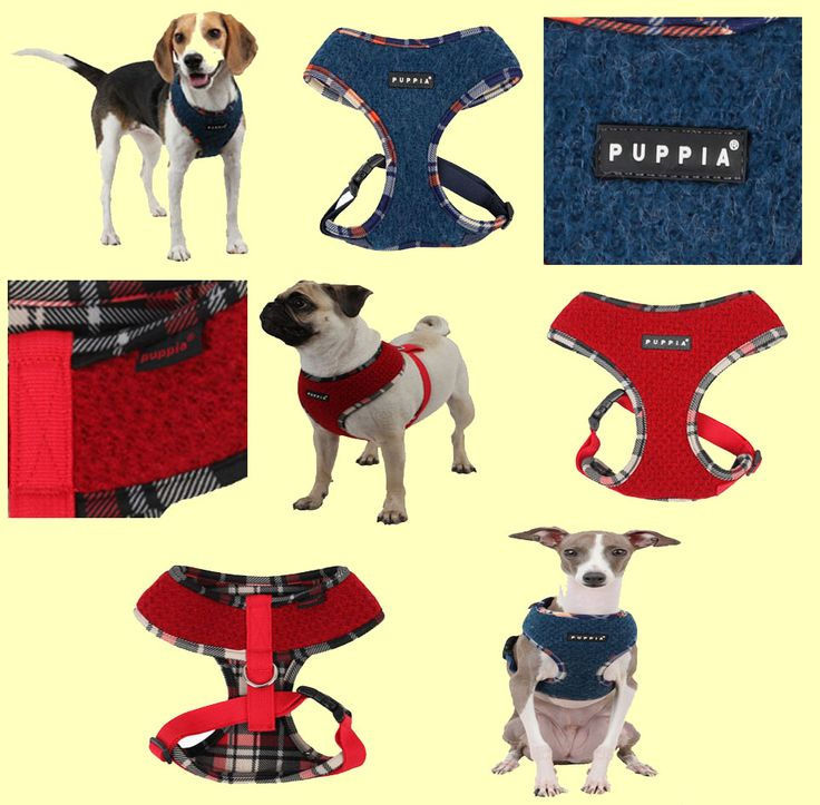 New Smurf (Winter) harness from Puppia!  This warm and stylish harness comes in two colour choices (red or blue) and is available in sizes small. medium, large and xlarge. This harness retails for $29.00 on www.puppiaharness.ca
