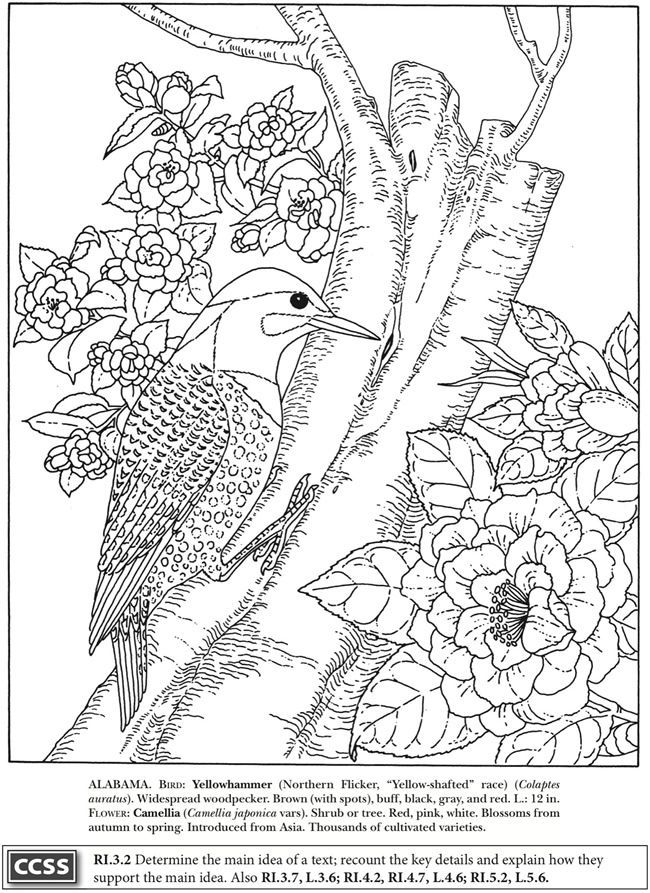 Yellowhammer And Camellia Alabama State Bird And Flower