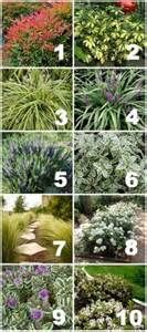 drought tolerant hedges in southern california - - Yahoo Image Search Results
