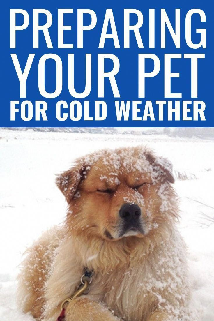 Preparing Your Pet For Cold Weather The Cold Weather Is Rough On