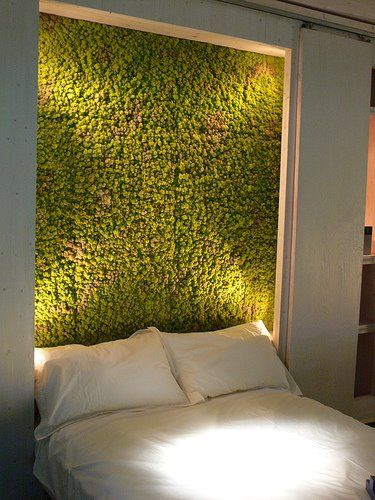 Imaginative use of Moss in the interior of a bedroom as a head board.