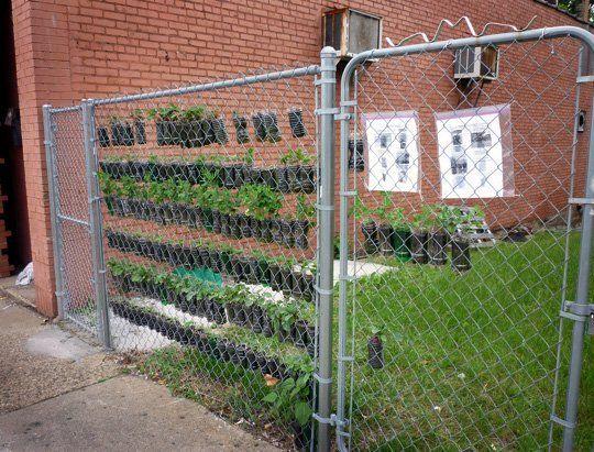 Small space vertical garden made from soda bottles gardens bottle and chain link fence - Plastic bottle vertical garden ideas ...