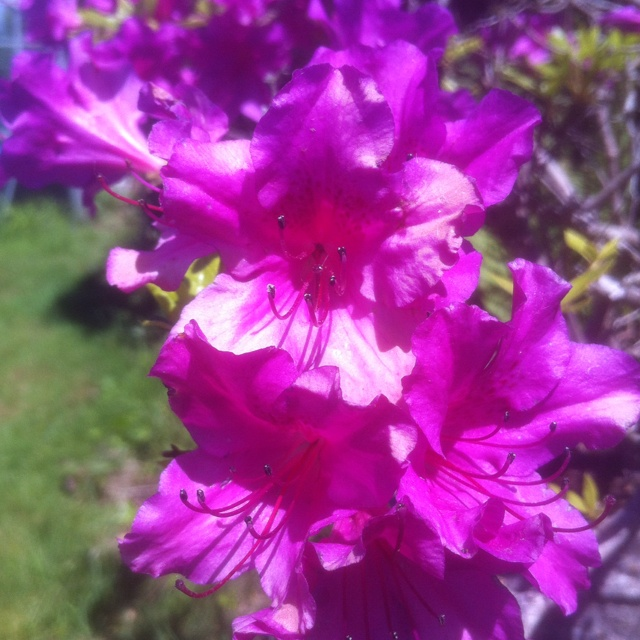 Spring and sunshineSpring Flower