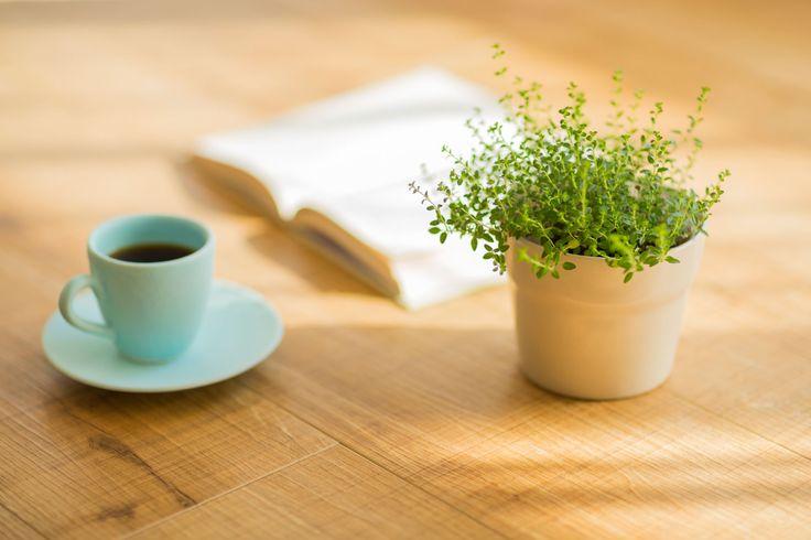 Best 25 Watering Plants Ideas On Pinterest House Plants