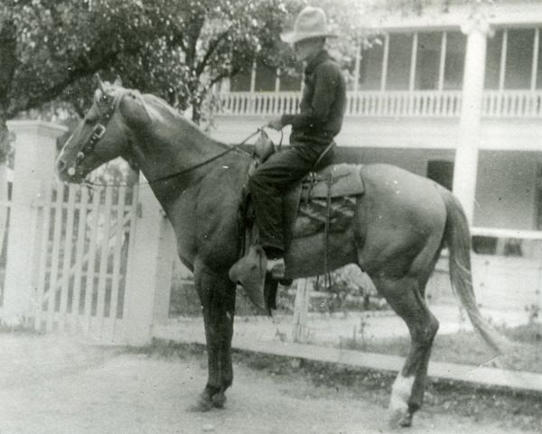 A history of the quarter horse
