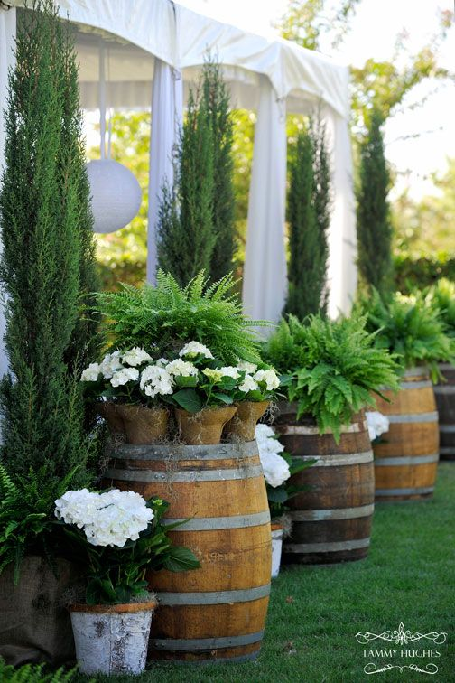 Barrels, ferns, hydrangeas, young Italian cypress.../ for outdoor party, picnic or reception (reminds me of @bartscott!)