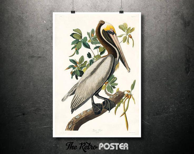 Brown Pelican - 1837 Birds of America by John James Audubon - Nature Prints, Bird Art, Bird Print, Botanical Poster Vintage, Kitchen by TheRetroPoster on Etsy