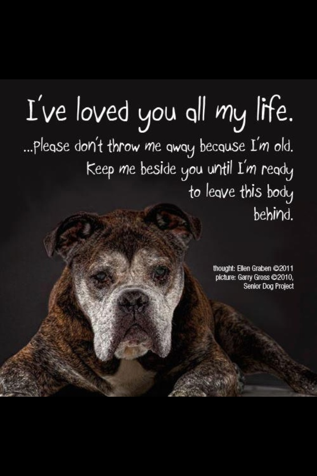 Old dogs dogs r the greatest love u can have next to ...