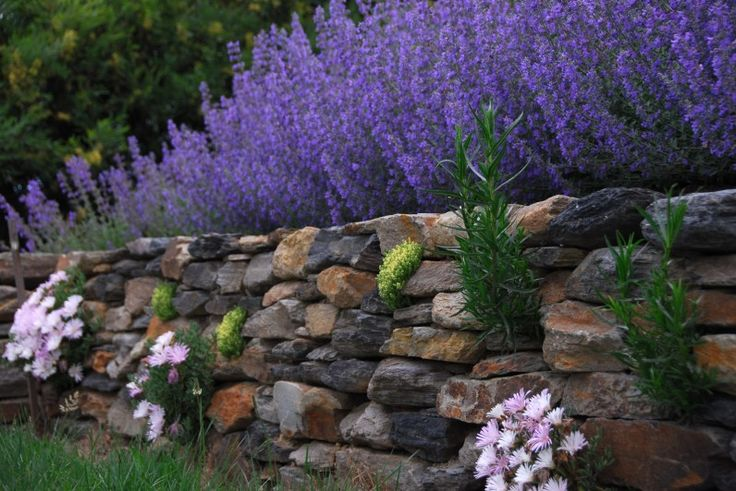 Pinner says: A dry-stone stone wall that I planted as I built it, following the century-old advice from Gertrude Jekyll in her classic Wall, Water and Woodland Gardens.
