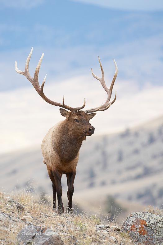 elk horn adult sex dating Escorts directory call girls and adult  elkhorn, nebraska escort services, call girls, prostitutes and sex dating  dating dinner weather in elkhorn, .
