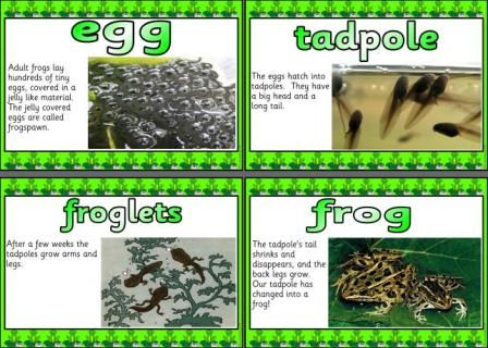 Free Life cycle of a frog printable posters.-  awesome... each one is a full page...  FREE