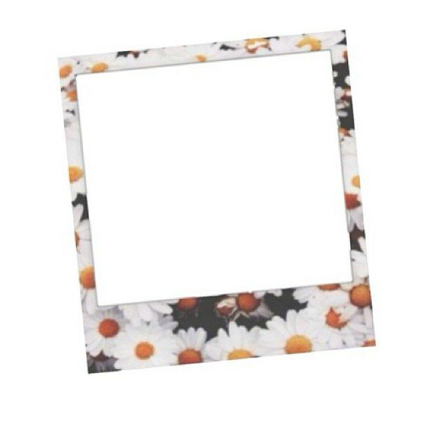 cute, floral, flower, frames, overlays, sunflowers, transparent