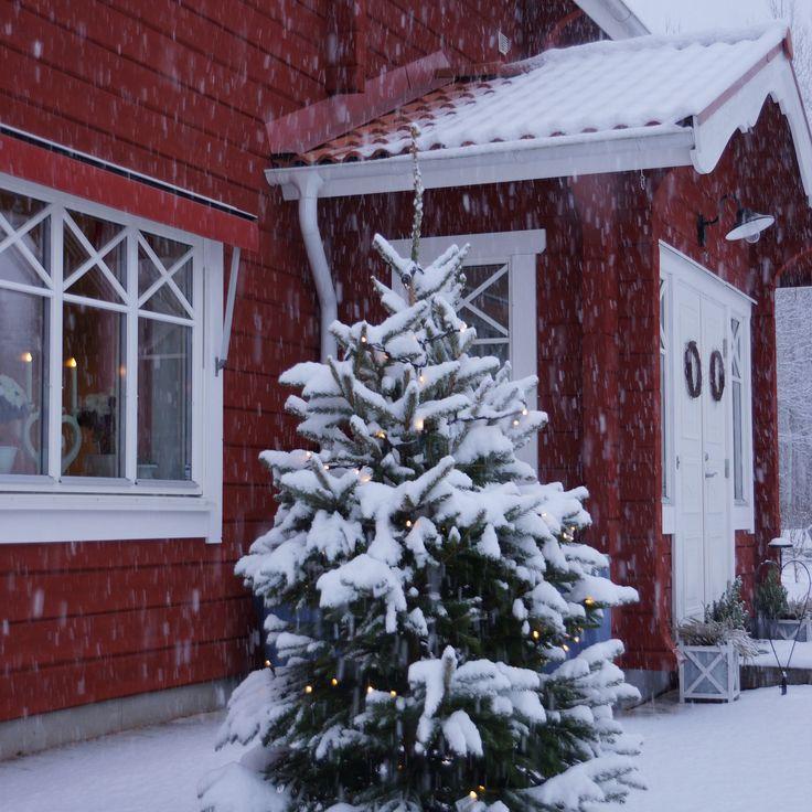 Snön föll; julgran; advent; xmas; timmerhus, Forsgrens timmerhus; dalarna; jul; pardörr; julstämning, Let it snow, I'm dreaming of a white christmas, winter, winter wonderland, timberhouse, loghouse, dalarna, sweden