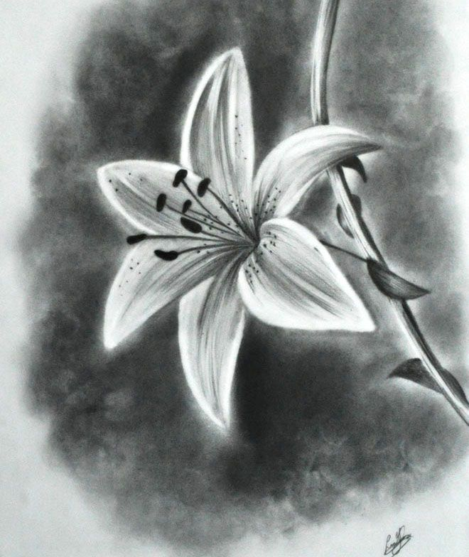 Pencil Sketches Images Of Flowers