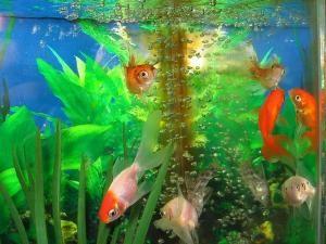 Como cuidar dos peixes de aquário