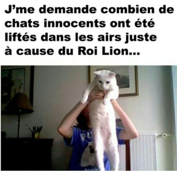 Je me demande combien de chats ont été liftés dans les airs à causes du roi lion...