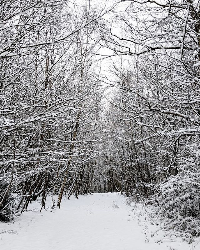 Mr Weatherman has said that we might wake up to some more snow on Sunday morning.   I'm kind of finished with winter now and I'm all ready for spring...where is the warmer weather?   #Uckfield #woodlandtrust #wintermood #winterstories