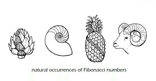 Fibonacci sequence in real life. Happy #FibonacciDay