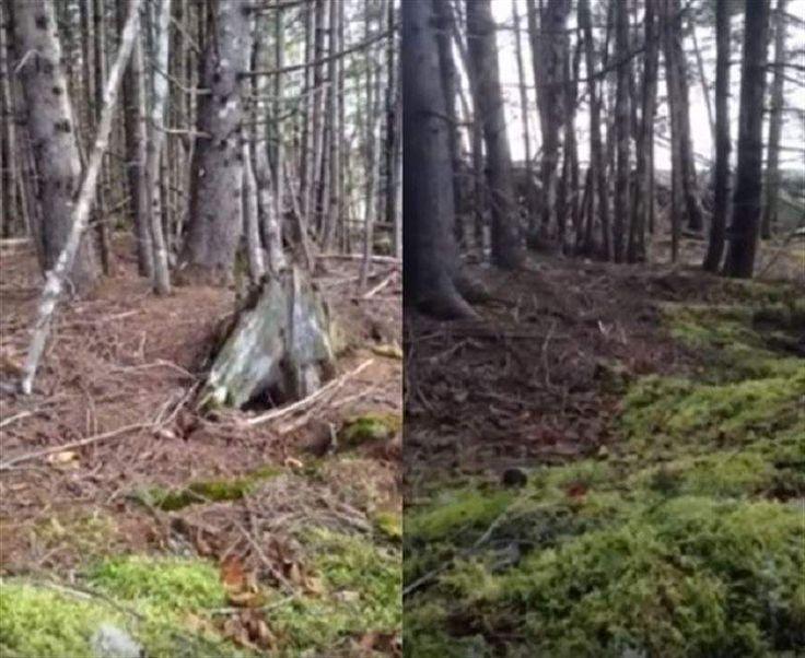 El último fenómeno viral en las redes es un video del bosque que 'respira' en Nueva Escocia
