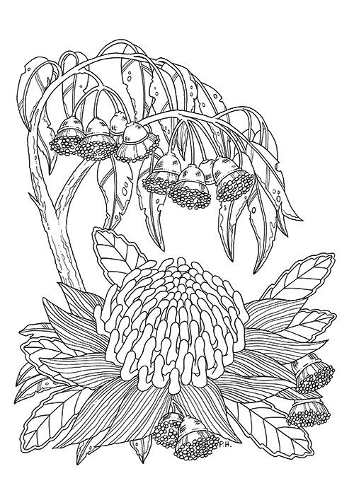 Peta Coloring Pages
