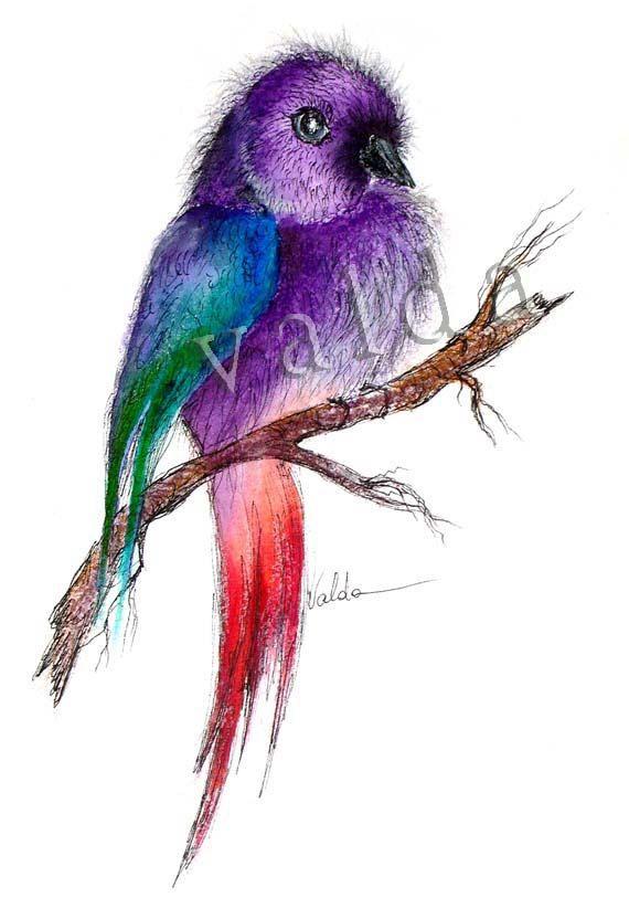 Purple Parrot 1  5x7 inch print  gift item. bird art