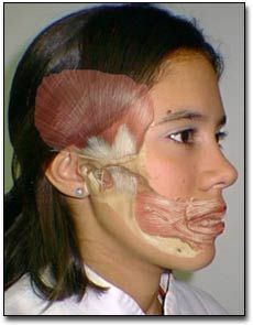 This is the exact area of my face and head that often hurts badly.  It feels as if that section is literally raw and cannot be touched.