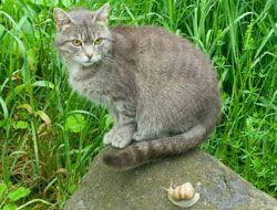 Katzen und Schnecken - beides Tiere, die im Garten großen Schaden anrichten können. Allerdings gibt es ein einfaches Hausmittel gegen sie: Kaffeesatz!    In vielen Haushalten fällt regelmäßig mehr oder weniger Kaffeesatz an. Wenn Sie einen Garten haben, dann sollten Sie diesen auf keinen Fall achtlos entsorgen, sondern ihn sich lieber noch zunutze machen. Jetzt werden Sie sich sicherlich f ...
