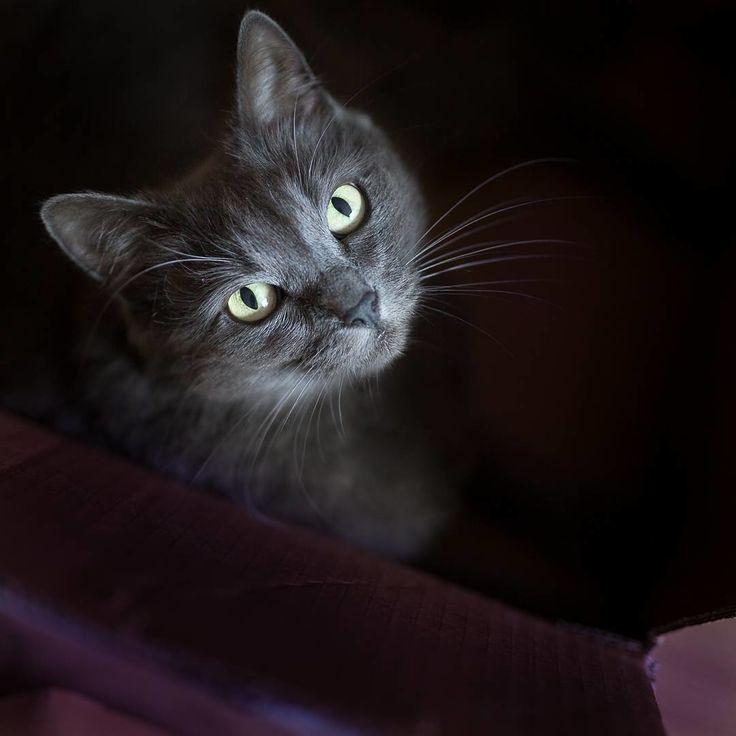 Модная котейка из Румынии «демонстрирует» изысканные наряды и украшения.