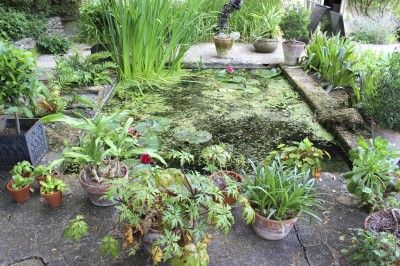 Moisture Loving Plants For Wet Areas – Learn About Water Tolerant Plants