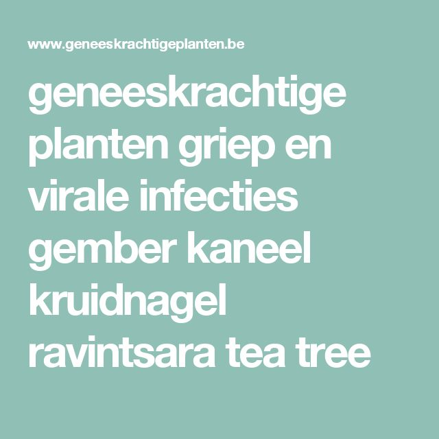 geneeskrachtige planten griep en virale infecties gember kaneel kruidnagel ravintsara tea tree