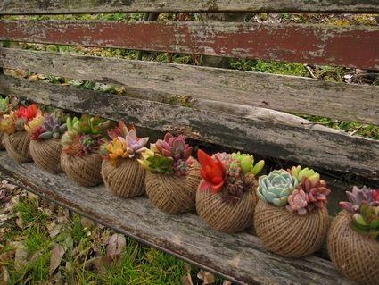 jardim suculentas - Pesquisa Google