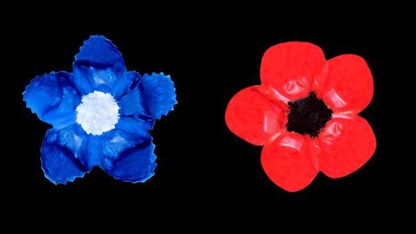 """Les coquelicots sont un symbole pour honorer les vétérans aux É.U. et dans les pays du Commonwealth.  En France, c'est le bleuet aussi connu sous le nom de  """"Bleuet de France"""". Ce projet est fait avec des fonds de bouteilles en plastique.  #tutoriel #veteran #DIY #Animassiettes #souvenir #France #US"""