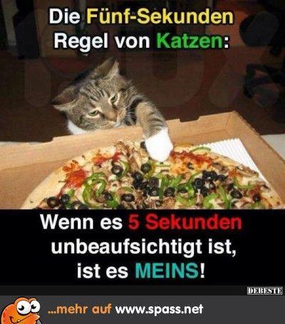 Katze klaut Pizza
