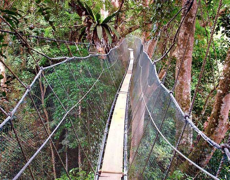 Poring Canopy Walkway a photo from Sabah East | TrekEarth & 7 best poring canopy walkway images on Pinterest | Walkways ...