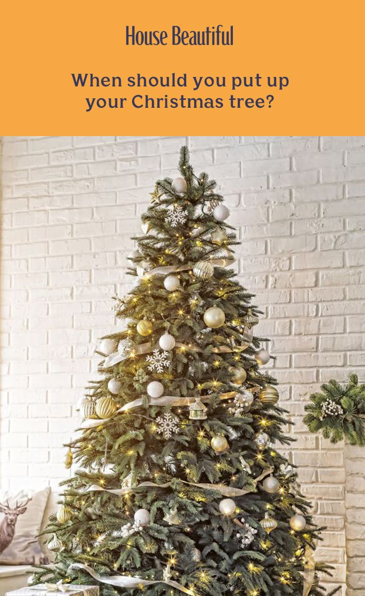 Is It Too Early To Put Your Christmas Tree Up In November Christmas Tree Christmas Trees Uk Christmas Inspiration